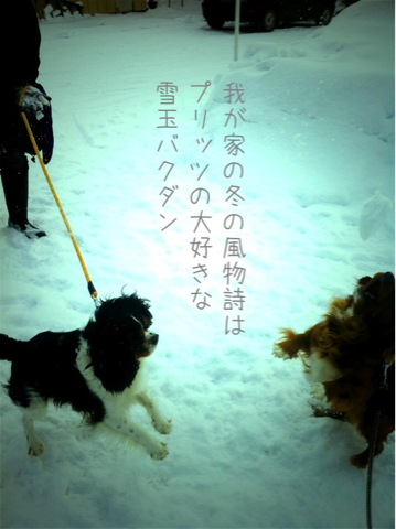 image-20110113130616.png